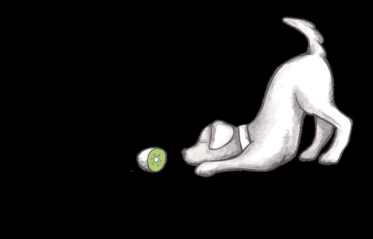 Kiwi-die-Hundeschule