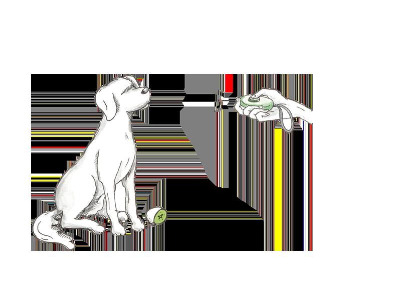 Hundeschule Kassel Training Clicker